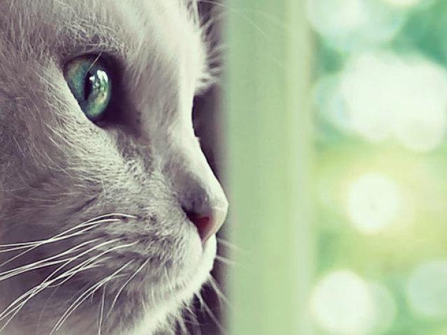Сприятливий період для стерилізації кішки і кастрації кота. Підготовка до стерилізації кішки і способи стерилізації, догляд після стерилізації. Процес кастрації та реабілітації кота