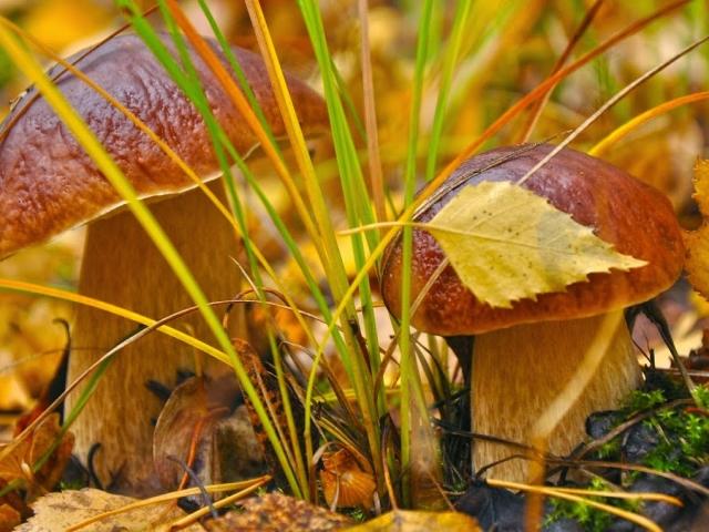 Грибні прикмети: народні замовляння грибників, грибні прикмети відповідно до народних і церковних свят