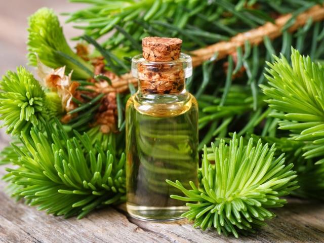 Хвойне масло. Ефірні олії сосни, кедра та ялини: властивості та застосування в домашніх умовах