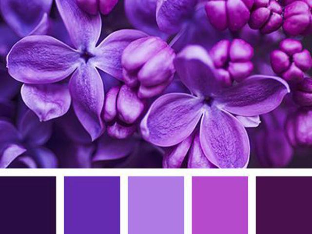Як отримати фіолетовий колір при змішуванні фарб, гуаші: покрокова інструкція, поради, фото. Які кольори фарб потрібно змішати, щоб отримати фіолетовий, світло-фіолетовий, темно-фіолетовий, яскраво-фіолетовий, бузковий, ліловий? Відтінки фіолетового кольо