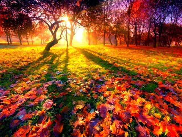 Твори про осінь: прекрасна пора року – осінь, осіння природа, осінній ліс, осінні квіти, осінні прикмети