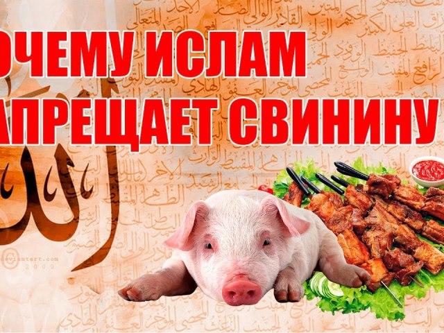 Чому мусульмани, євреї, жиди не їдять свинину: історія, легенда, заборона свинини у мусульман. Чому свинина заборонена в ісламі? Що буде, якщо мусульманин чи єврей з'їсть свинину? Є країни, де мусульманам дозволено їсти свинину?