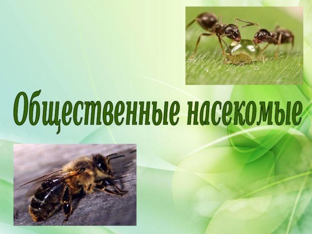 Чому бджіл і мурашок називають громадськими комахами? Особливості складного поведінки суспільних комах: опис. Чим громадські комахи відрізняються від одиночних: порівняння, подібності та відмінності