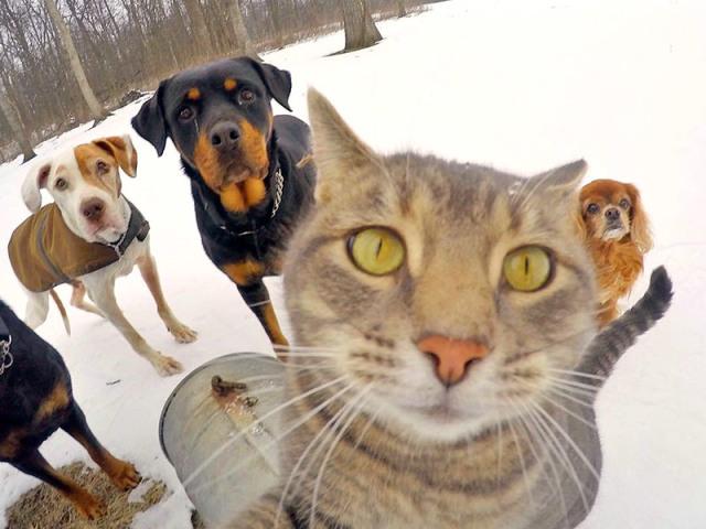 Прислів'я та приказки про собаку для дітей дошкільного та шкільного віку, школи, ДНЗ: збірник кращих прислів'їв з поясненням сенсу. Які є і як знайти прислів'я та приказки про собаку для дітей?