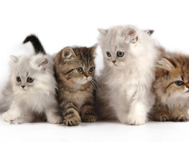Яким кормом краще годувати кішку: кращі корми — поради ветеринарів. Види корму для кішок, небезпечний корм для кішок — як вибрати хороший корм для кішки?