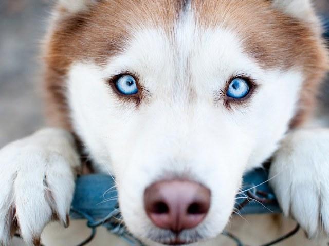 100 цікавих, дивних і незвичайних фактів про собак з усього світу: перелік