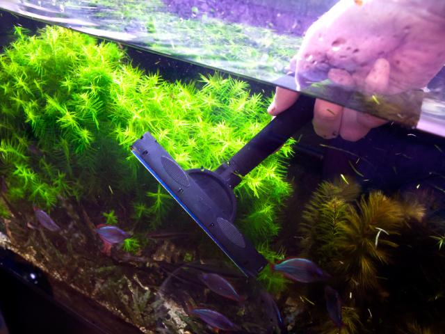 Зеленіє вода в акваріумі: причини, способи усунення. Що робити, щоб не зеленіла вода в акваріумі: профілактичні заходи