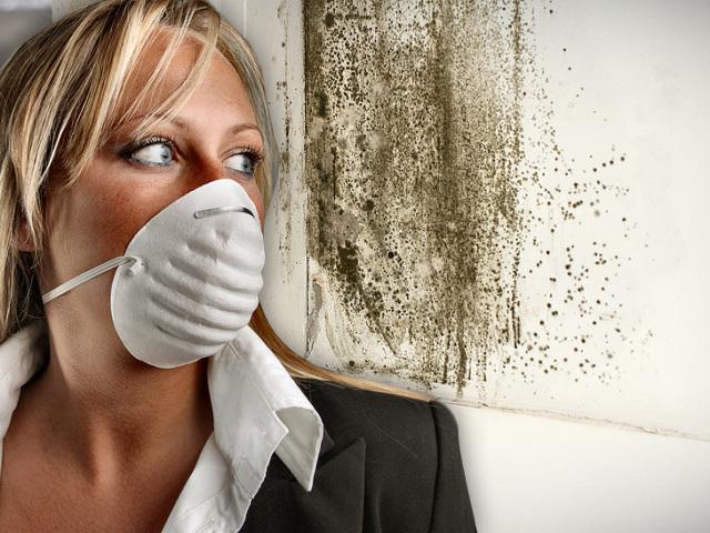 Запах вогкості: причини, народні методи усунення, поради. Як вивести запах вогкості в квартирі? Як позбавитися від запаху вогкості на меблях, в автомобілі?
