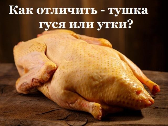 Як відрізнити тушку гусака від качки?