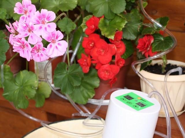 Як залишити, полити, зберегти квіти вдома на час відпустки? Як зробити полив квітів їдучи у відпустку? Поливалка для квітів під час відпустки своїми руками