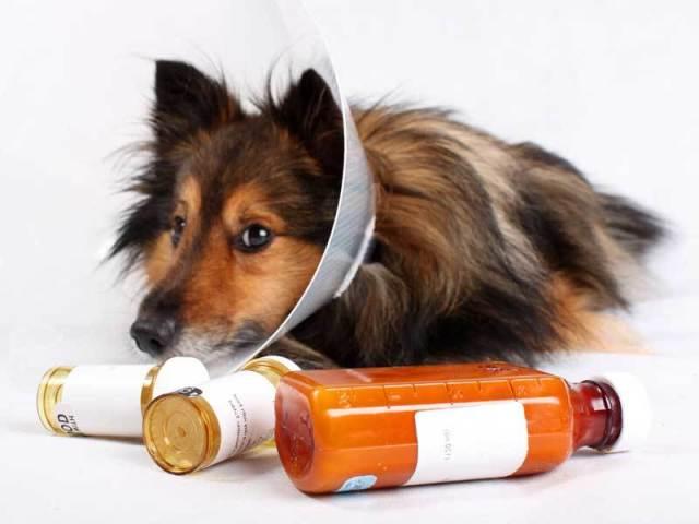 Бурсит ліктьового і колінного суглоба у собак. Як вилікувати бурсит у собаки, щенята?