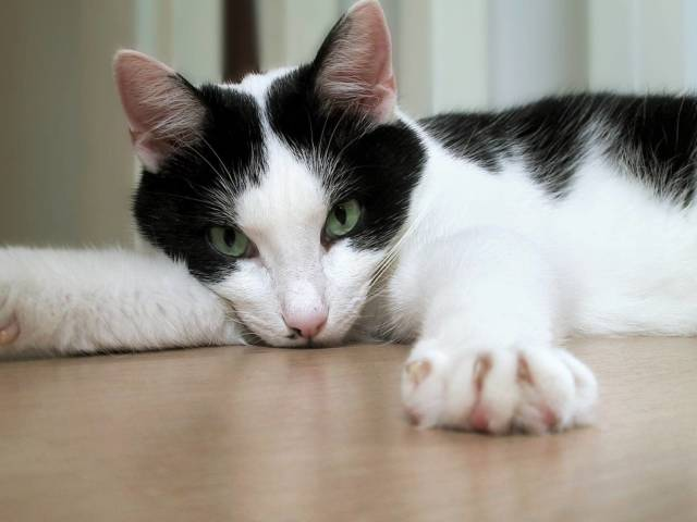 Енцефаліт у тварин: як проявляється у кішок і собак? Укусу енцефалітного кліща у собак і кішок: симптоми, ознаки, лікування, щеплення