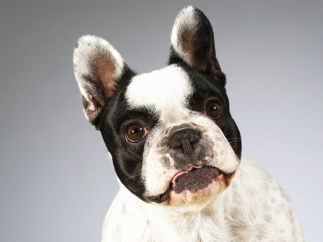 Захворювання печінки у собак: симптоми, ознаки, причини, лікування. Дієта і харчування собаки при захворюваннях печінки, лікувальний корм