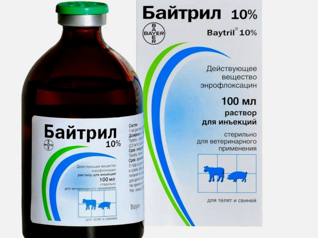 Байтрил – антибіотик: інструкція із застосування і дозування для голубів, котів, собак, курей, птахів, папуг, перепілок, кролів. Байтрил: аналоги і відгуки