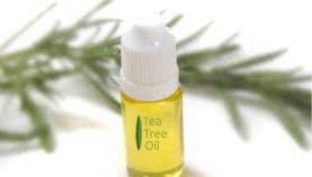 Масло чайного дерева: користь і шкода, тонкощі вибору і застосування