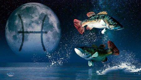 Характеристика та сумісність Риб, народжених у рік Щура