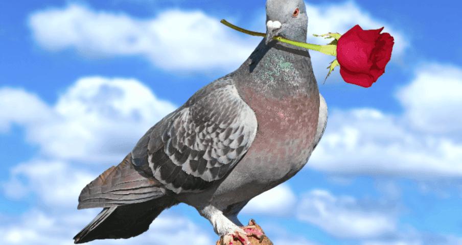 Що означає, коли голуб сів на підвіконня: прикмети для дівчини і хлопця. Що значить, коли голуби сидять на підвіконні: прикмети, пов'язані з погодою, церковними святами, матеріальним достатком і майбутнім