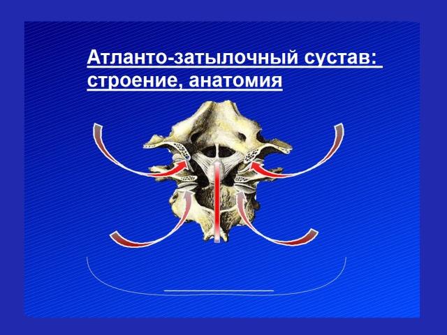 Атлантозатылочный суглоб: що це, де знаходиться — будова, зв'язки, м'язи, анатомія, руху, функції, кровообіг. Які кістки беруть участь в утворенні атлантозатылочного суглоба?
